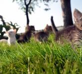 cat-727265_1920 (2)